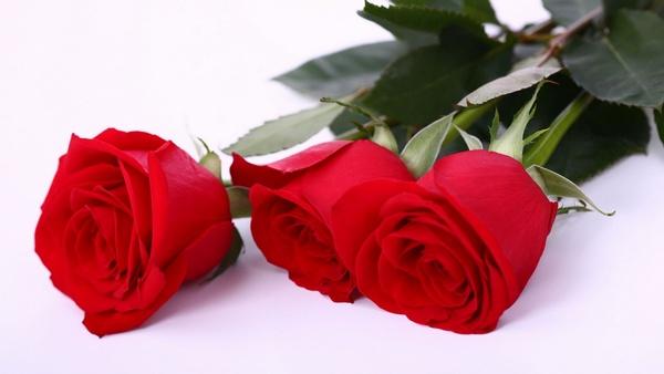 Что означает роза в букете?
