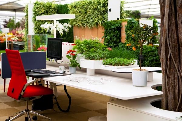 Растения в рабочем кабинете - зелень против стресса!