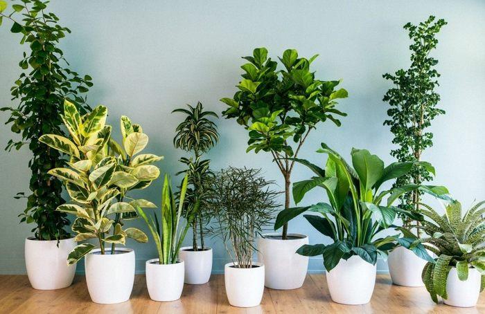 Комнатные растения: 3 важных фактора их благополучия