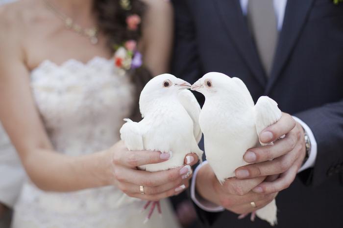 Романтичная традиция отпускать белых голубей на свадьбе - что она означает?