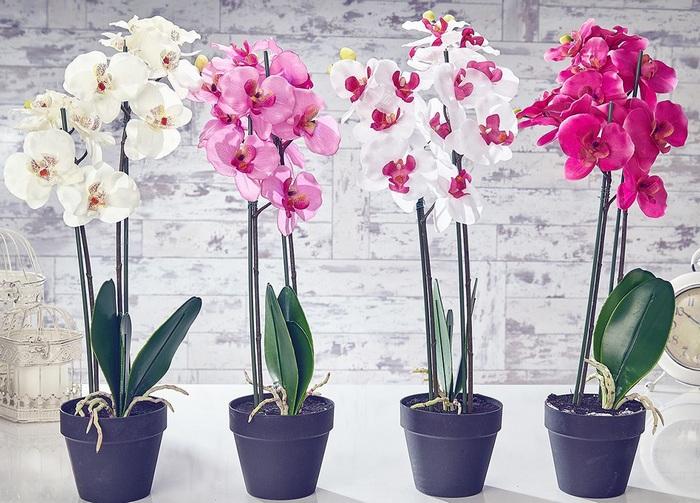Декоративнорастущие растения для дома - особый колорит!